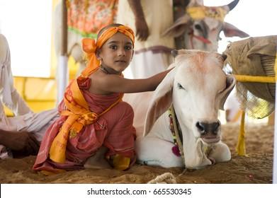 Pathmeda  / India 30 October 2014   Hindu rajasthani village boy with   holy cow  at Pathmeda Godham    Rajasthan   India