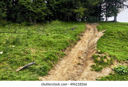 Paths on mountaintop meadows, surrounded by (fir) pine forests. Carpathian Mountains view, Romania.