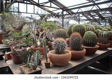 Pathumthani ,THAILAND - MARCH 9,2019:  Uncle Chorn 's Cabin nursery in Thailand produce wholesale cactus and succulent cultivar and odd plant in Thailand