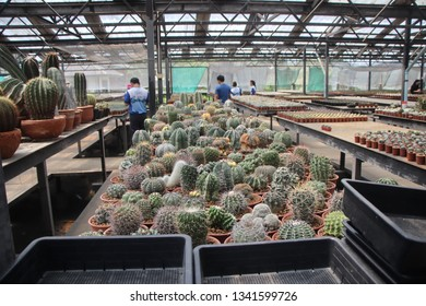 Cactus Nursery in Thailand Images, Stock Photos & Vectors | Shutterstock