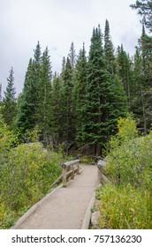 Pathway Among Evergreen Trees