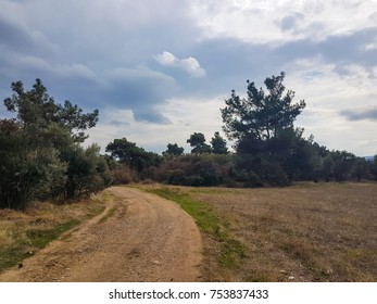 pathway around fields rural areal with pines and olive trees