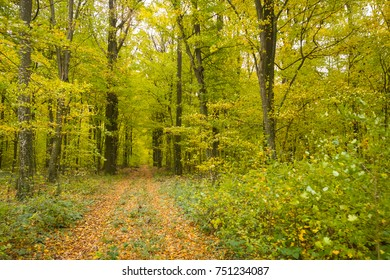 A pathway in the autumn forest.