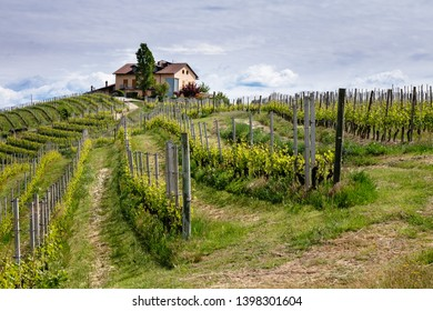 Pathway from Barolo to Monforte d'Alba among famous and historic Barolo vineyards. Viticulture, Langhe, Piedmont, Italy, Unesco heritage. Nebbiolo, Barolo, Dolcetto, Barcaresco wine.
