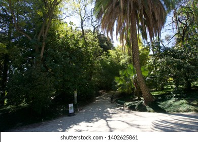 Pathway between trees in Lisbon Botanical Gardens, Portugal