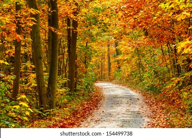 Pathway in the colorful autumn forest