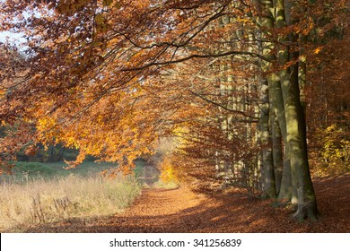 Pathway in colorful, sunny, autumn beech forest