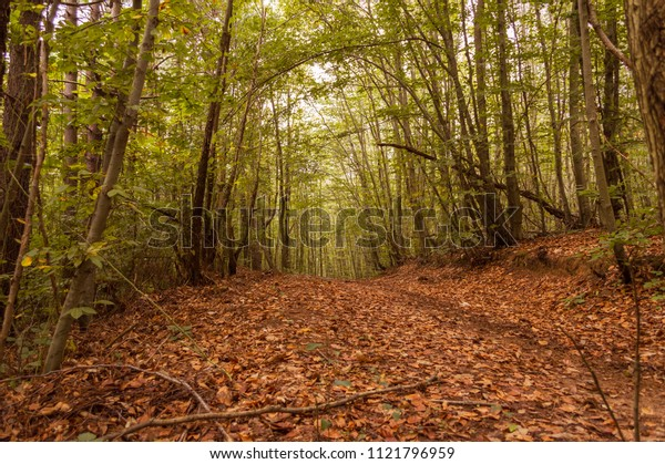 Pathway covered with autumn leaves and tree branches in the forest