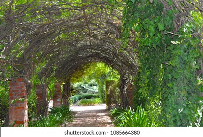 A pathway covered with green vine climbing along the arbor and stone columns. Barossa Valley in South Australia.