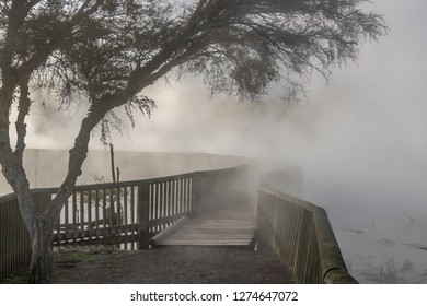 Pathway disappearing into steam of Kuirau thermal park in early morning, no people, Rotorua