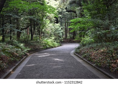 Pathway in forest 2