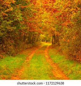 Pathway in the forest in autumn