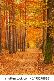 Pathway in the forest at autumn