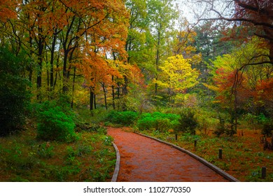 Pathway in the forest in autumn with red, orange, green and brown plants, trees and leaves.