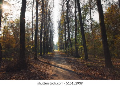 Pathway in the forest at autumn with trees and colorful leaves