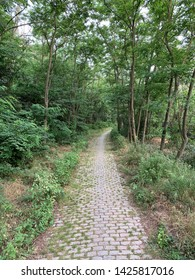 Pathway in the forest in Catalonia
