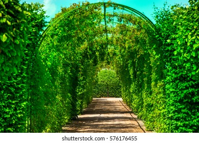 Pathway to gate, bright green bushes in royal castle garden, backyard. Maze, alley, tunnel in fresh spring foliage. Natural, vintage style background on beautiful sunny summer day. Walks through park