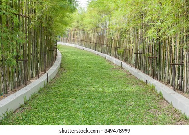 pathway with green grass on both sides by bamboo