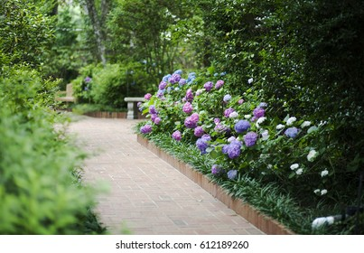Garden Hydrangeas Images Stock Photos Vectors Shutterstock