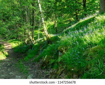 Pathway into bluebell wood