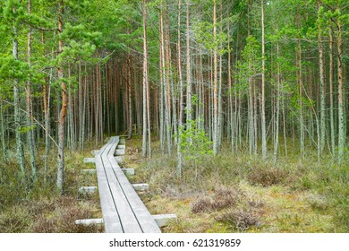 pathway into the woods