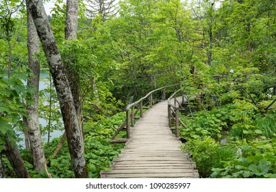 Pathway into the woods at Plitvice Lakes National Park in Croatia