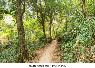 Pathway in a jungle in the North Easter region of India. Meghalaya.