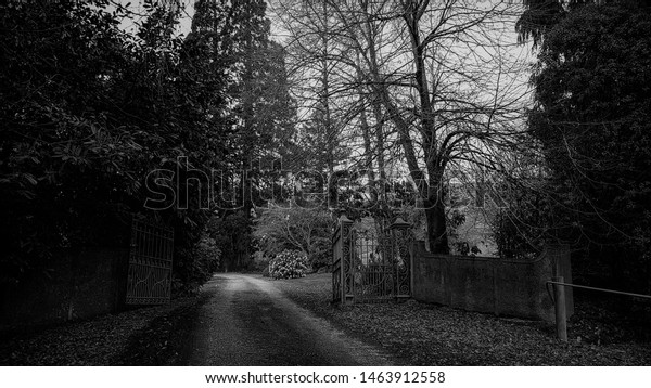 Pathway leads to old gate and forest, West Otago, New Zealand. Black and white.
