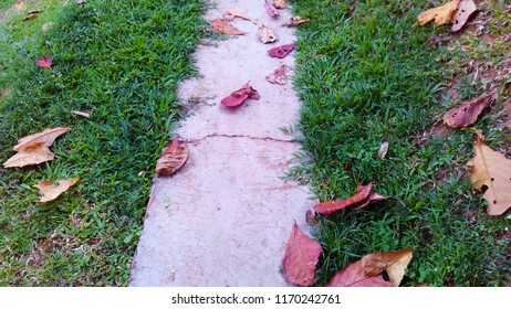 A pathway with leafs on the ground.