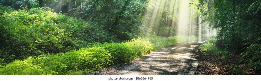 Weg in einem majestätischen grünen Laubwald in einem Morgennebel. Alte Baumsilhouetten, Nahaufnahme. Atmosphärische traumhafte Sommerlandschaft. Sonnenstrahlen, weiches Licht. Reine Natur, Ökologie, Fantasie, Märchen