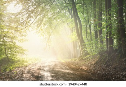 Pathway in a majestic green deciduous forest. Natural tunnel. Mighty tree silhouettes. Fog, sunbeams, soft sunlight. Atmospheric dreamlike summer landscape. Pure nature, ecology, fantasy, fairytale - Shutterstock ID 1940427448
