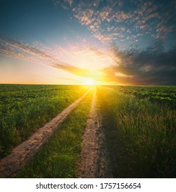 The pathway in the middle of the green field on the sunset