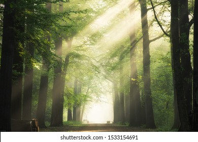 A pathway in the middle of the green leafed trees with the sun shining through the branches