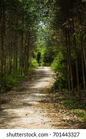 The pathway in the mountain