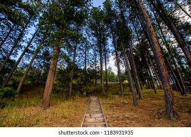 Pathway up the mountain and into the forest