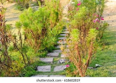 The pathway in the nature