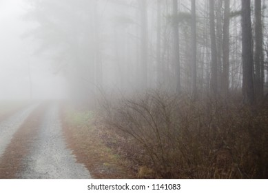 Pathway on a foggy morning with woods