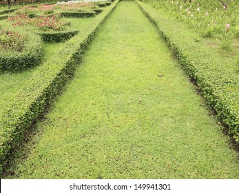 Pathway in the park with green grass background