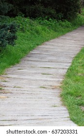 Pathway in a park leading to a forested area. Wooden path wooden boardwalks, wooden sidewalks, in sammer park