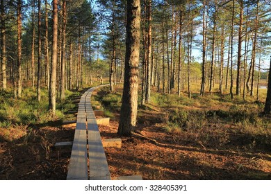 Pathway in the pine forest in Estonian bogs