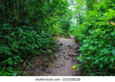 pathway to the rainforest on manoa falls trail in manoa,