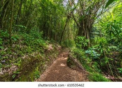 pathway to the rainforest on manoa falls trail in manoa, near honolulu hawaii Oahu USA