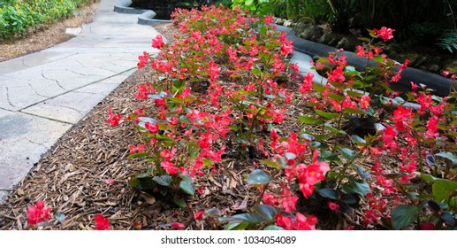 Pathway of red Flowers