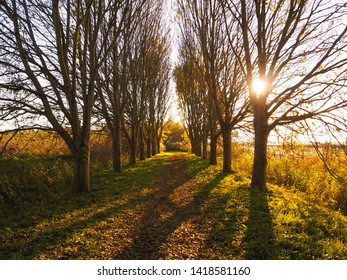 A pathway shaped by rows of trees leading to an unknown destination. An autumn landscape by sunset, at nature reserve Oostvaardersplassen, The Netherlands.