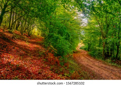 Pathway to success. Autumn forest with two paths. Two paths in the autumn forest. Red, yellow, green, autumn, relaxing.