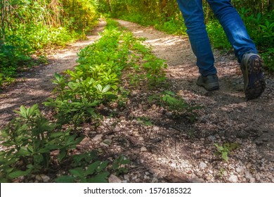 Pathway to success concept a man walk on road in the forest go to the light at the destination with space area for write some text on background meaning walk to success concept