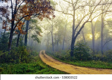 Pathway through a beautiful blue foggy autumn woods
