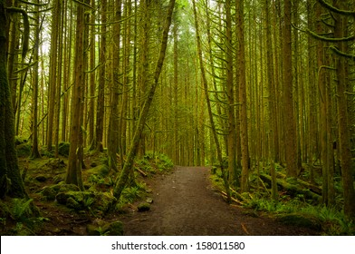 A pathway through the dense woodland forest at Golden Ears Provincial Park, British Columbia (BC), Canada