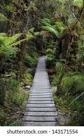 Pathway through the ferns