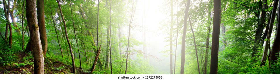 Pathway through the hills of green swampy deciduous forest, plants and fern close-up. Panoramic view. Idyllic summer rural scene. Environmental conservation in Europe. Ecosystems, ecology, ecotourism